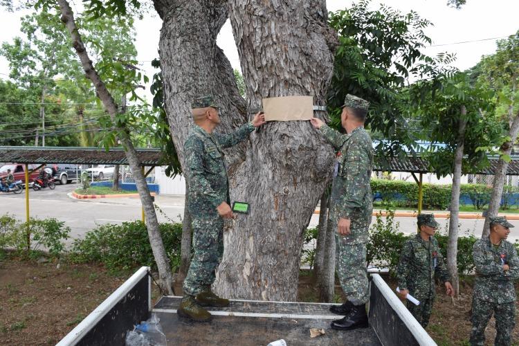 tree tagging 3